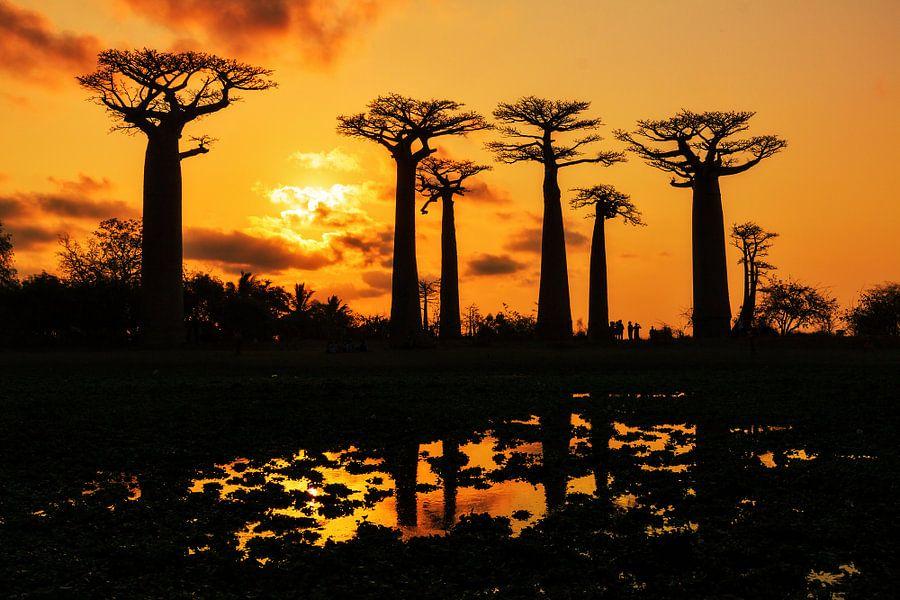 Silhouet Baobabs van Dennis van de Water