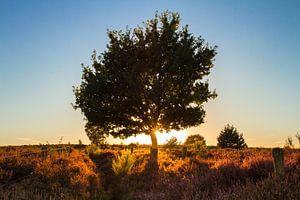 Zon achter de boom