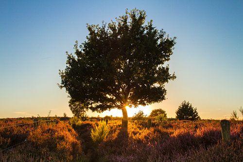 Zon achter de boom van
