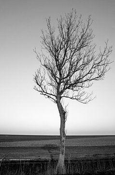 Minimalismus auf dem Hochland von Groningen (2) von Bo Scheeringa Photography