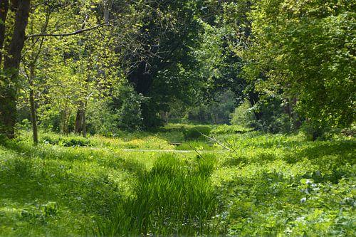 Een groene sfeervolle plek