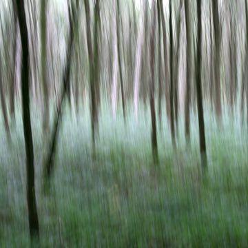 Het bos I van Volker Banken