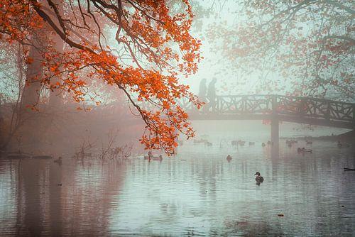 Herfst kleuren van Martijn Kort