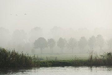 mistige morgen van Nynke de Bruijne