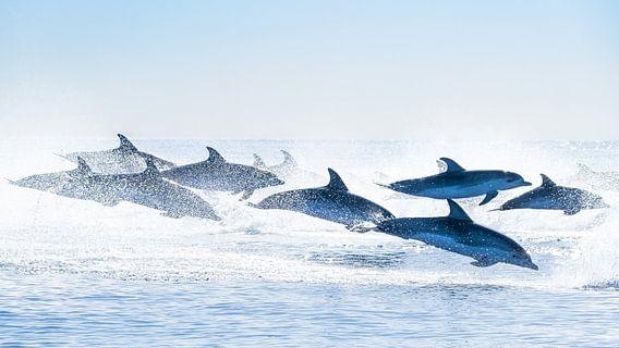 Groep Tuimelaars in de Atlantische Oceaan