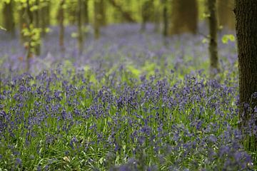 Wilde hyacinten van Rob Hendriks