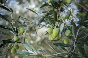 olijven sur Johan Vet