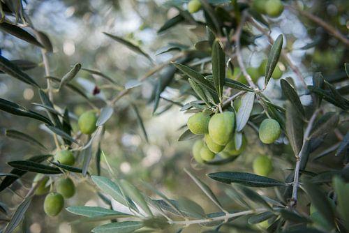 olijven van Johan Vet