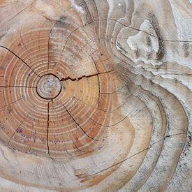 Jaarringen boom van Lotte Veldt