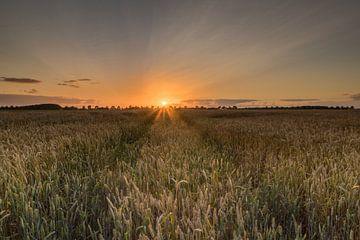 Zonsondergang graanveld van Jan Koppelaar