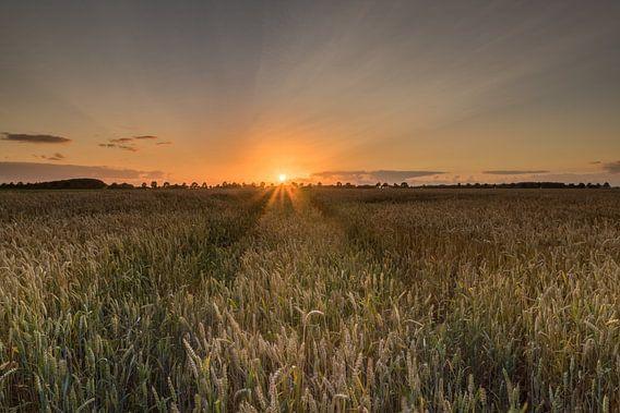 Zonsondergang graanveld