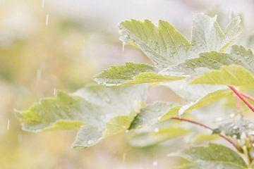 Blad in de regen van Anne Dellaert