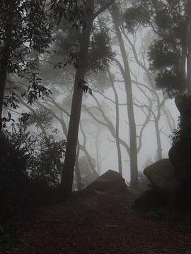 Mysterie in de bossen van Sintra nabij Lissabon van Nadine Geerinck