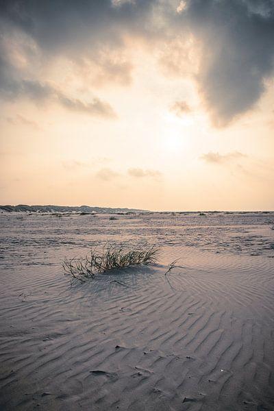 Life in the desert (Terschelling) van Alessia Peviani