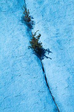 Planten tussen de stenen
