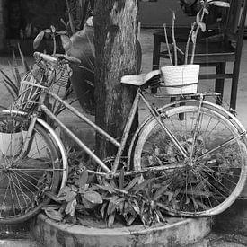 Retro fiets tussen planten, Vietnam van Inge Hogenbijl