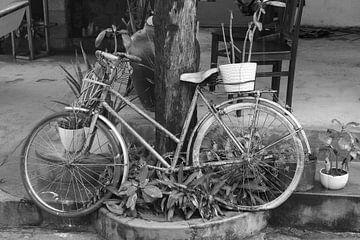 Oldtimer-Fahrrad von Inge Hogenbijl