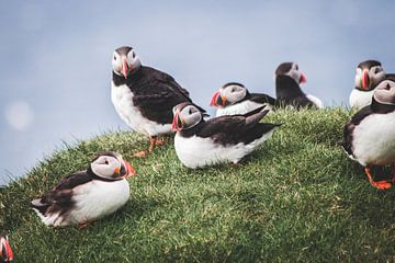 Papegaaiduikers op de Faeröer eilanden van Expeditie Aardbol