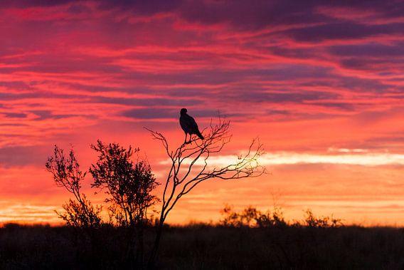zonsopgang van Patries Photo