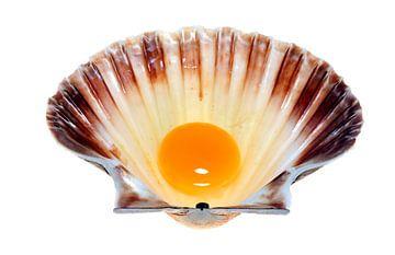 Coquille schelp met eidooier van Martijn Smit