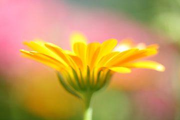 Gele bloem sur Anja van Zijl