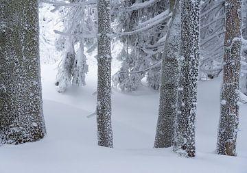 Sneeuw en IJskristallen op dennenbomen in de sneeuw van André Post