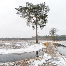 Winterliche Landschaft von Gonnie van de Schans