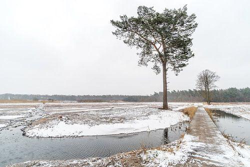 Winterliche Landschaft von