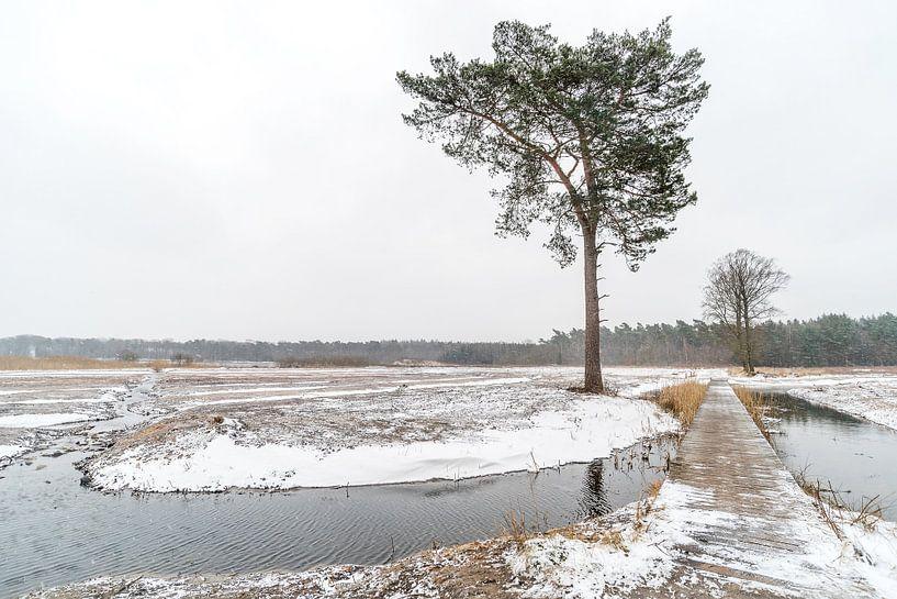 Paysage hivernal sur Gonnie van de Schans