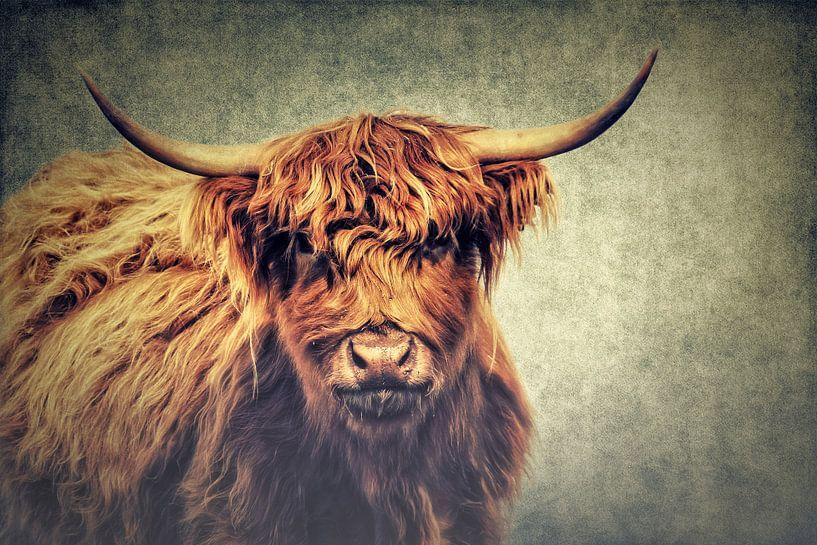 Highland Cattle van Angela Dölling