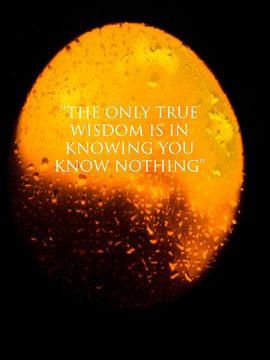 De geboorte van de wijsheid van Natascha Meriana