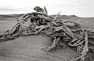 dood hout in Deathvlei nabij de Sosusvlei in Namibië