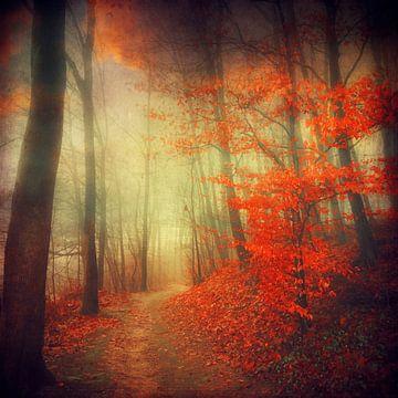Herfstvuur - bospad in herfstkleuren van Dirk Wüstenhagen