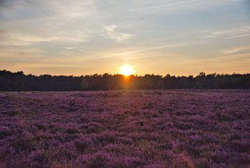 Ondergaande zon boven de bloeiende heide. van Jurjen Jan Snikkenburg