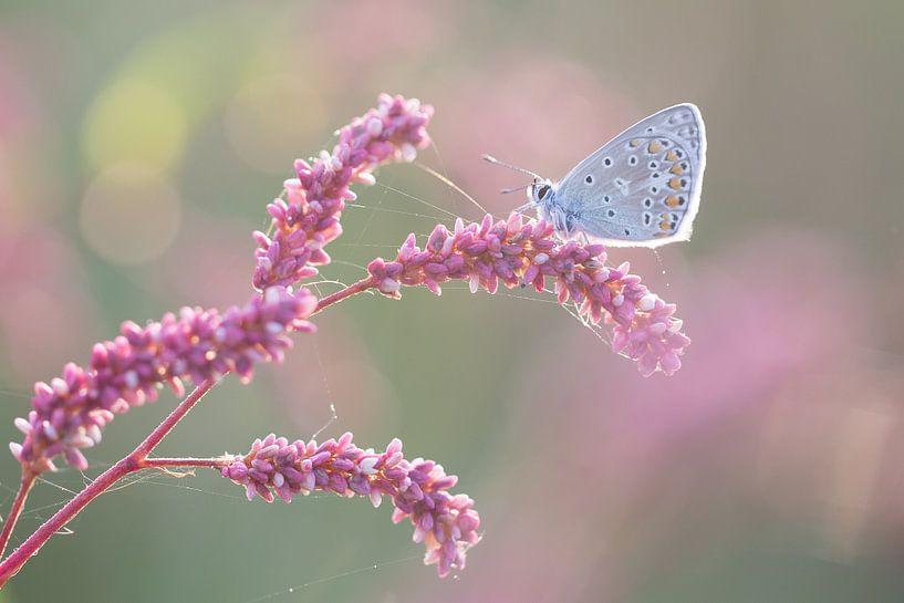 Blauw vlindertje op roze takje van Judith Borremans