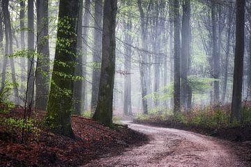 Mistig bos sfeer van Cor de Hamer