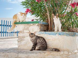 Drei Katzen posieren in einer griechischen Gasse