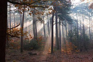 Sonnenstrahlen im Wald! von Peter Haastrecht, van
