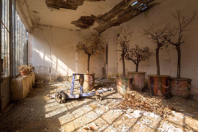 Verlassene Orangerie. von Roman Robroek
