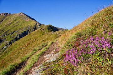Heide & Gipfel von Coen Weesjes