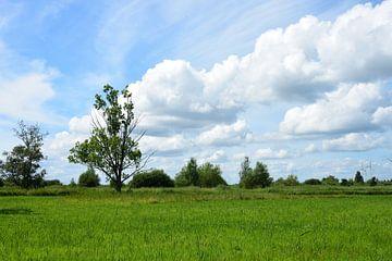 Nederlands polder landschap van Gerard de Zwaan