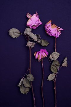 Verfallene Rosen von Karel Ham