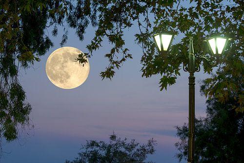 Pleine lune sur Miranda van Hulst