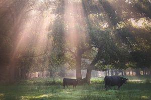 Een perfecte ochtend van jowan iven