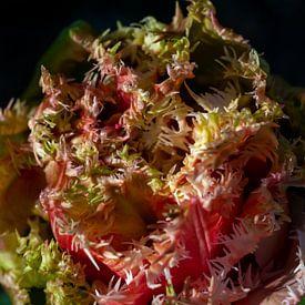 Close-up tulp van Margreet Frowijn