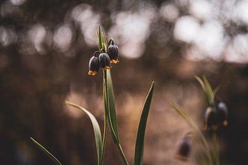 Blumen Teil 95 von Tania Perneel