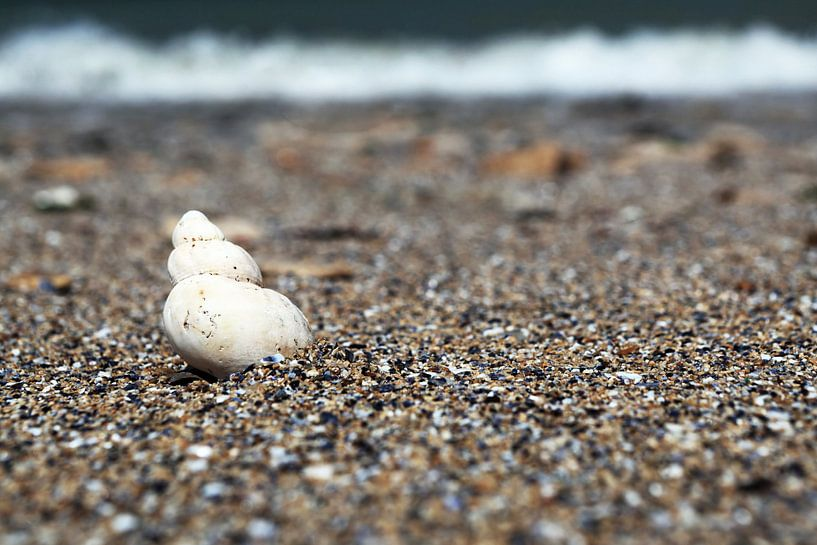 Coquillage sur la plage sur Frank Herrmann