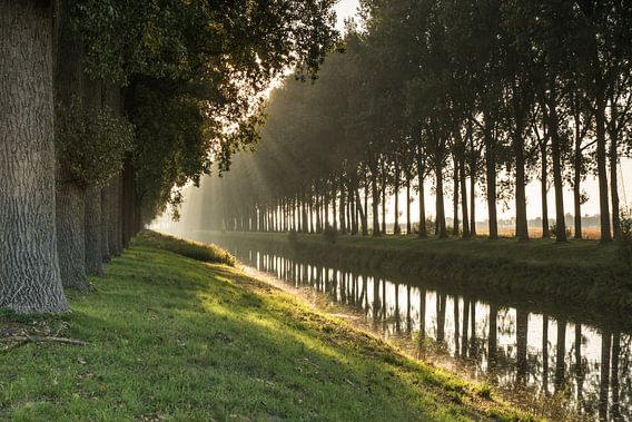 Bomenrij in de ochtendnevel langs een afwateringskanaal
