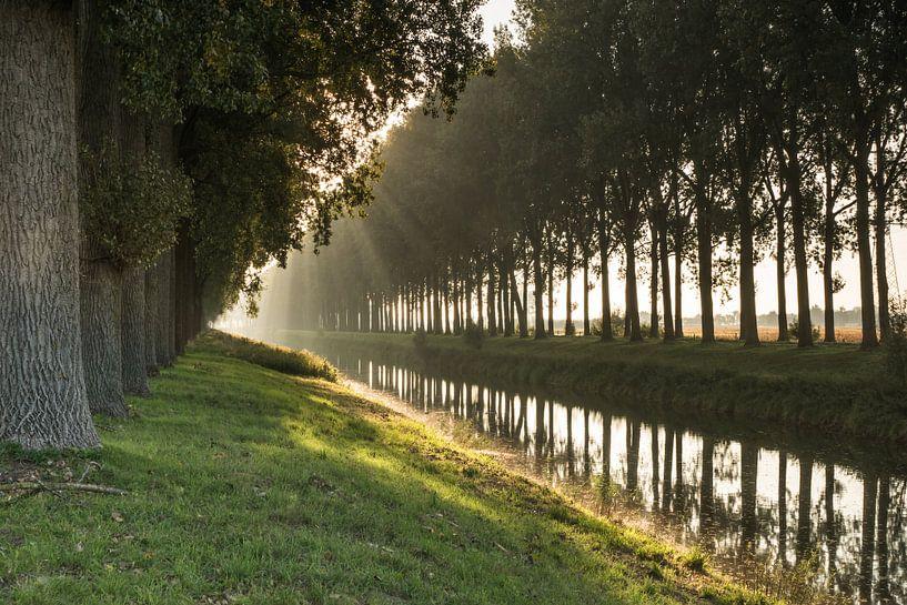 Bomenrij in de ochtendnevel langs een afwateringskanaal van Nico de Lezenne Coulander