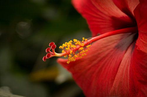 Rode bloem op groen